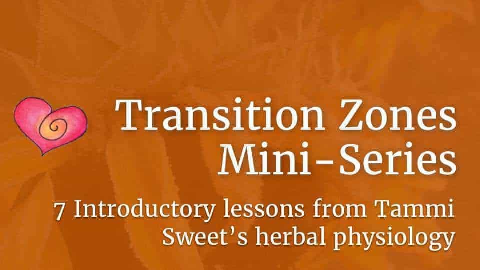 Course-TZ-mini-logo